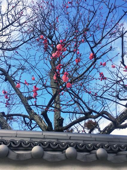 早春の花と春の味_f0045132_17263996.jpg