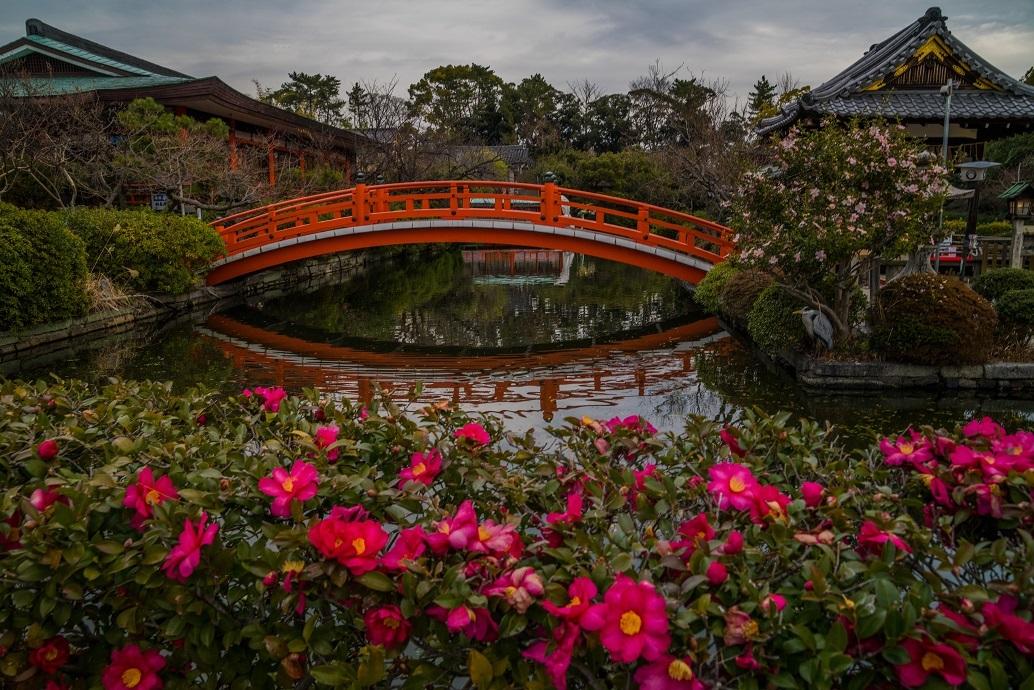 神泉苑の山茶花_e0363038_14420643.jpg