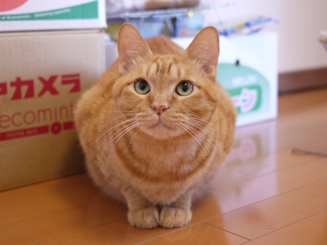 猫のお留守番 たくあんくん編。_a0143140_23101326.jpg