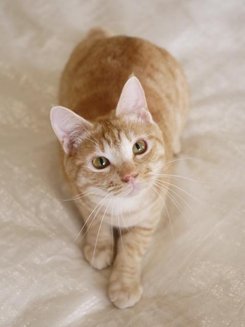 猫のお留守番 ひのきくん編。_a0143140_23194160.jpg