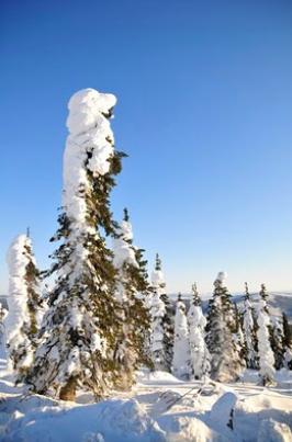 樹氷 -Rime Ice-_b0135948_15512924.png