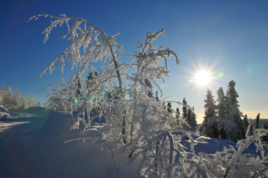 樹氷 -Rime Ice-_b0135948_15512985.png