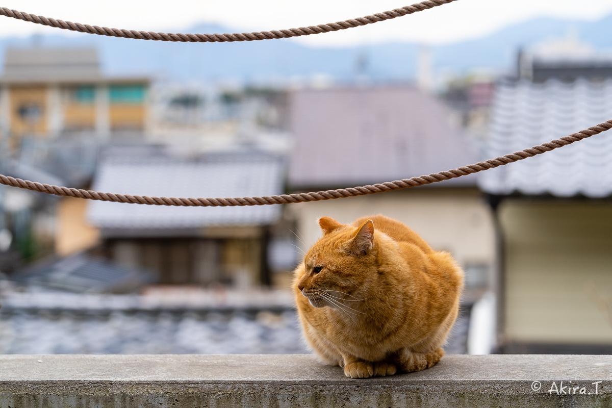 〜岩合光昭に挑戦〜 京都ネコ歩き -21-_f0152550_22301095.jpg