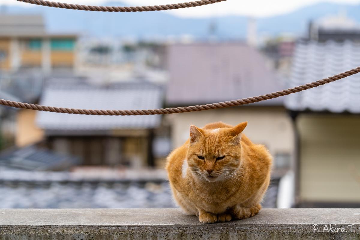〜岩合光昭に挑戦〜 京都ネコ歩き -21-_f0152550_22301770.jpg