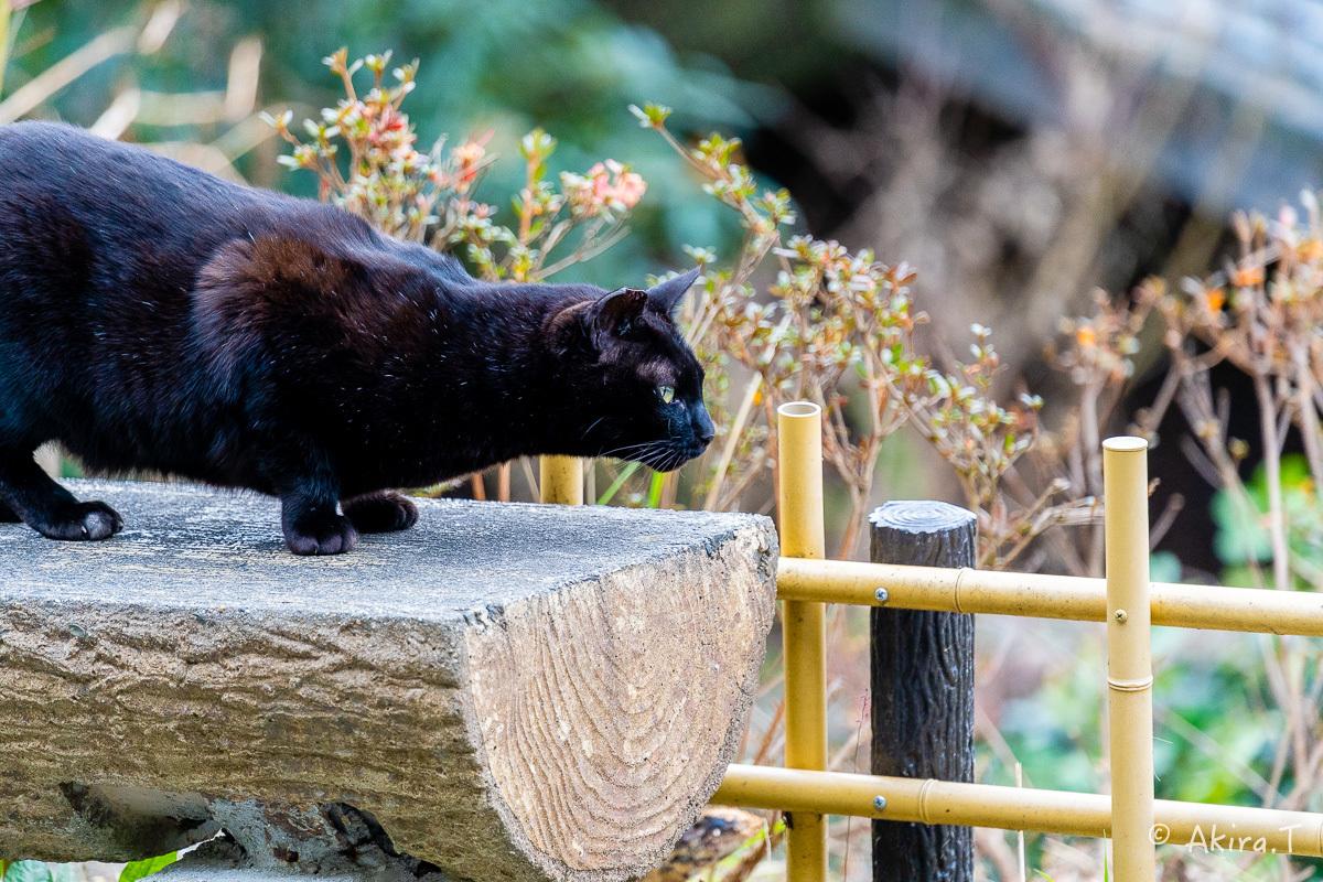 〜岩合光昭に挑戦〜 京都ネコ歩き -21-_f0152550_22324960.jpg
