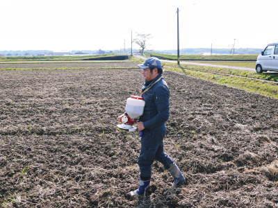 熊本県菊池市七城町『砂田のこだわりれんげ米』 れんげの発芽 2020年も変わらぬ栽培方法です!_a0254656_17354419.jpg