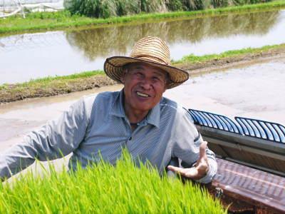 熊本県菊池市七城町『砂田のこだわりれんげ米』 れんげの発芽 2020年も変わらぬ栽培方法です!_a0254656_17471661.jpg