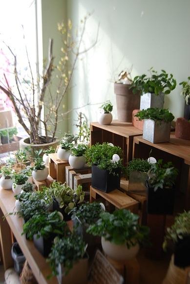 観葉植物を楽しむ_a0201358_16361740.jpg