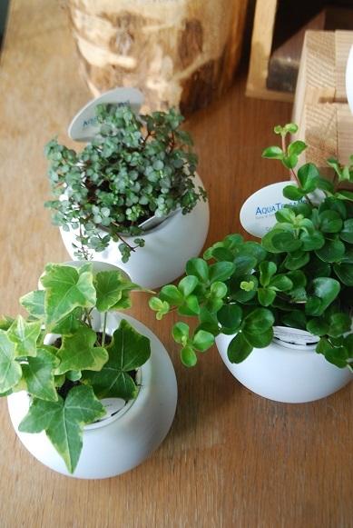 観葉植物を楽しむ_a0201358_16364275.jpg