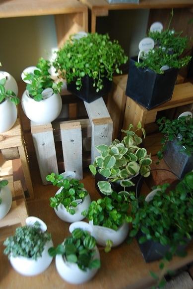 観葉植物を楽しむ_a0201358_16365056.jpg