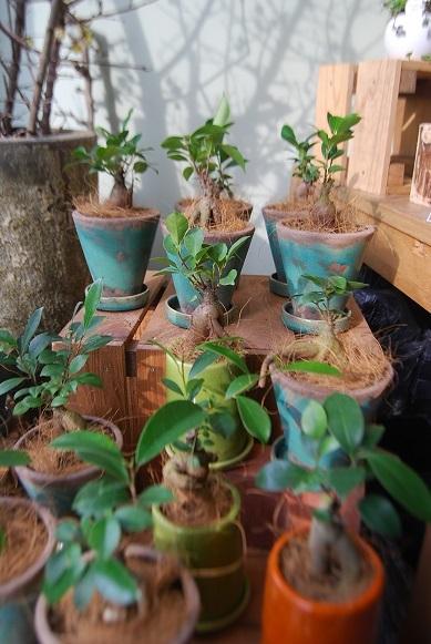 観葉植物を楽しむ_a0201358_16370911.jpg
