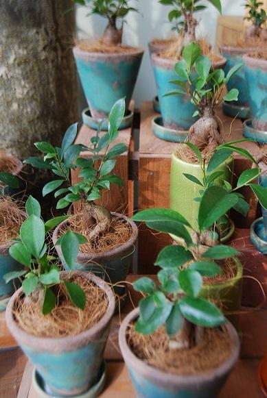 観葉植物を楽しむ_a0201358_16445042.jpg