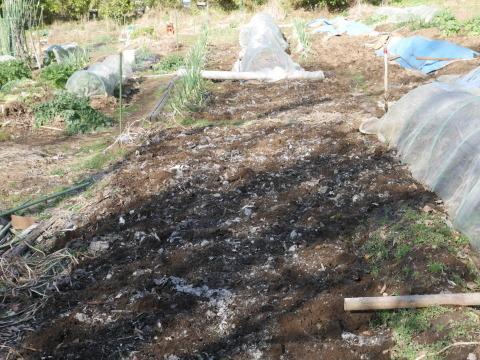 灰など撒き、ジャガイモとサトイモの植え付け準備2・2_c0014967_21090789.jpg