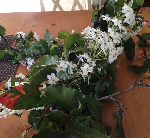 庭に咲く草花で生け花の練習ーネコヤナギ、ハナナシ等々_e0350971_06012868.jpg