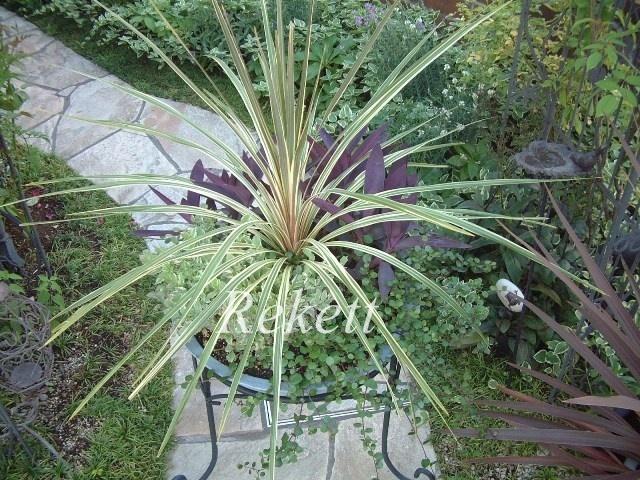 インテリア&ガーデンにおすすめです~❤_f0029571_23451460.jpg