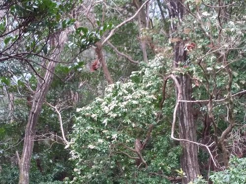花だより、山では馬酔木が ・・・_b0102572_23210108.jpg