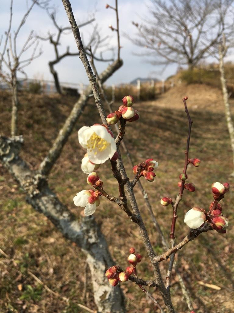 「節分の日の朝」&『裏山の梅の花と今年の薪ストーブ』_c0334574_19423717.jpeg