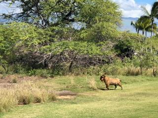 ハワイ島のゴルフ場_a0233991_20201689.jpg
