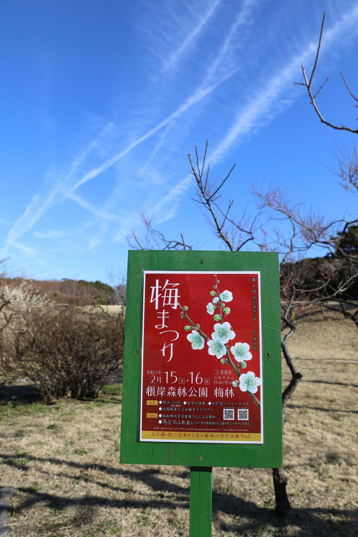 根岸森林公園と最終奥義♪_b0275998_08215465.jpg