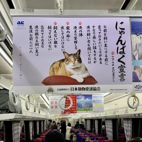 ポカポカ陽気の東京_f0099102_16141638.jpeg
