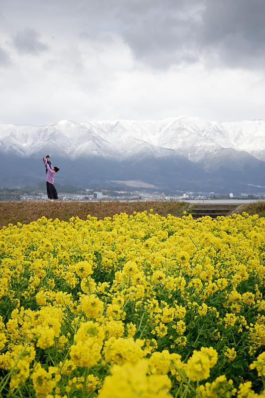 再訪 菜の花と雪の比良山@守山 なぎさ公園_f0032011_20005203.jpg