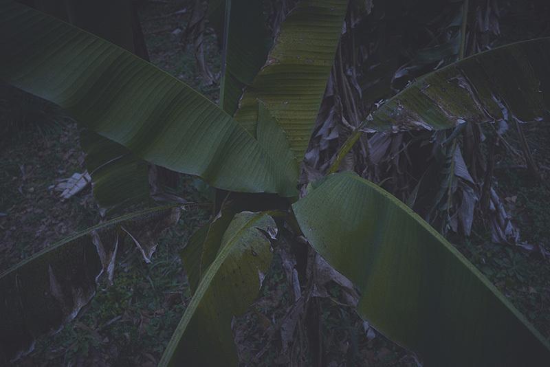 シーラカンスの森の底_a0214416_17565690.jpg