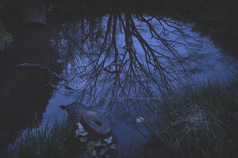 シーラカンスの森の底_a0214416_17565709.jpg