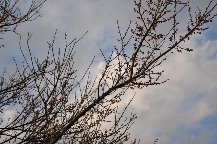 春の気配_f0189218_21373512.jpg