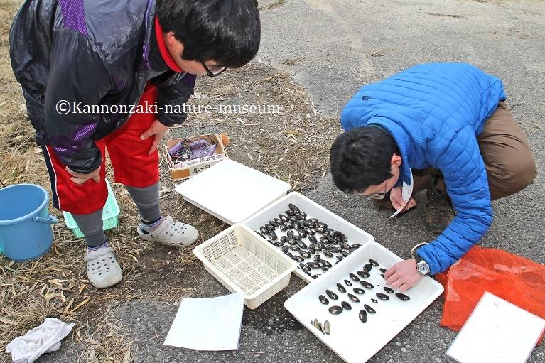 淡水二枚貝3種の調査_a0386621_15142114.jpg