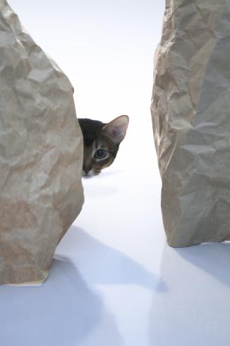 [猫的]秘境_e0090124_08480399.jpg