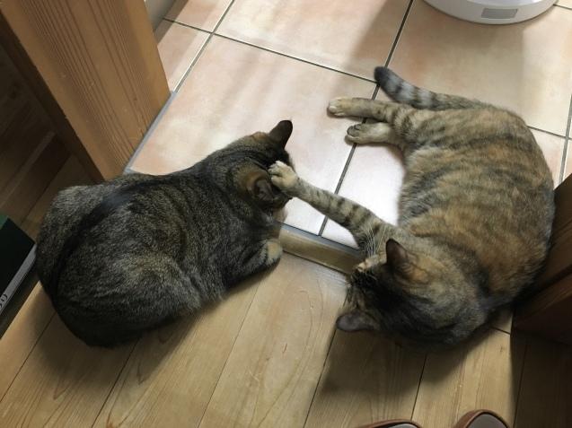 寒くなるとこうなる猫_e0053528_00493136.jpg
