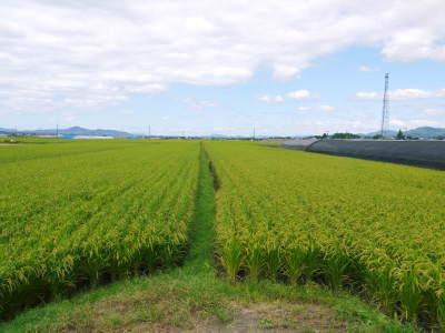 有機栽培の水田ごぼう 土作りから種まき、そして現在の発芽まで(2020) _a0254656_17193554.jpg