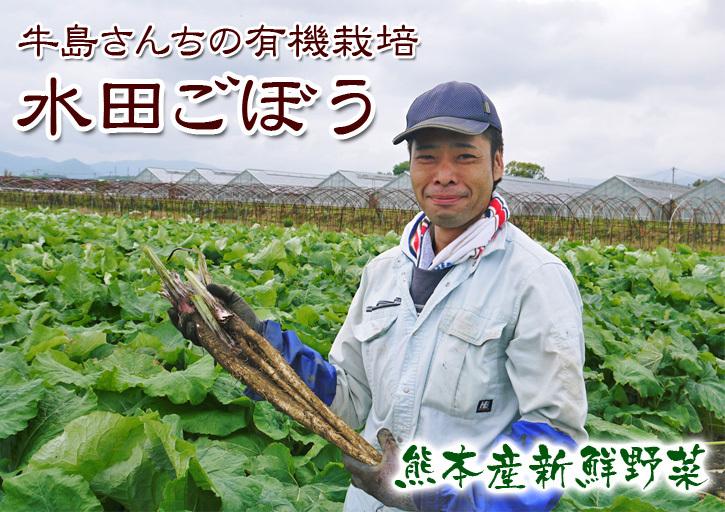 有機栽培の水田ごぼう 土作りから種まき、そして現在の発芽まで(2020) _a0254656_17375973.jpg