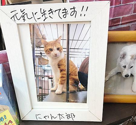 初代看板猫のにゃん太郎_e0362456_16524805.jpg