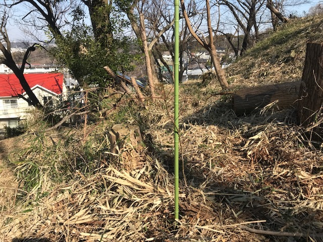 鉢植えのイロハモミジを六国見山に植樹、累計483本に2・3_c0014967_06072106.jpg