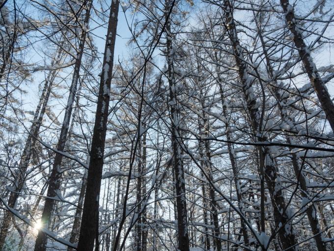 昨日もまた雪・・ついに例年並みの積雪量になりました。_f0276498_23222210.jpg