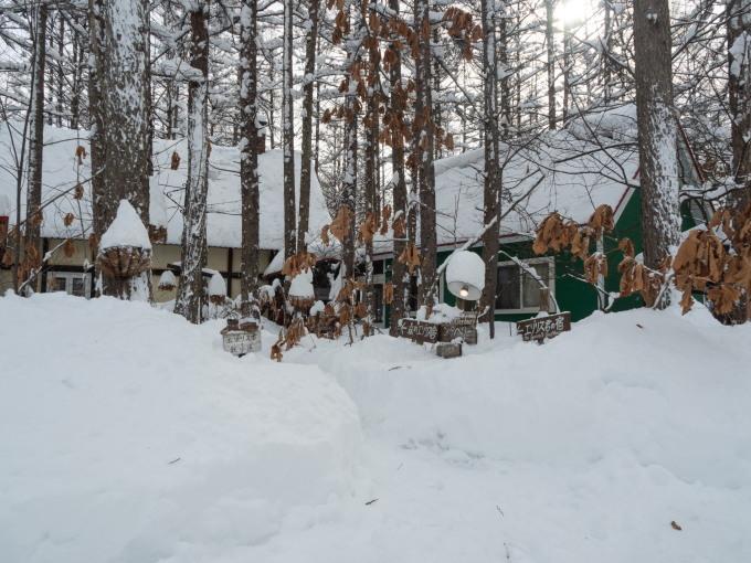 昨日もまた雪・・ついに例年並みの積雪量になりました。_f0276498_23225263.jpg
