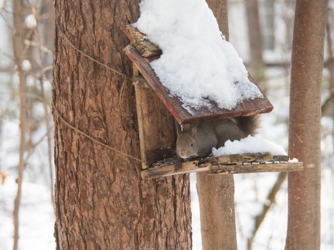 昨日もまた雪・・ついに例年並みの積雪量になりました。_f0276498_23230287.jpg