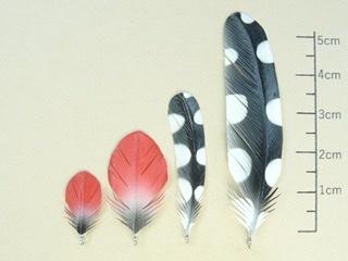 ポルカドット(水玉模様)の羽の主_b0365715_23152035.jpeg