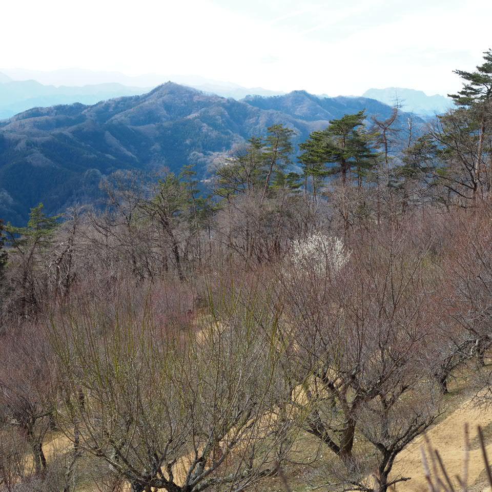蝋梅の山へ_b0206421_17292184.jpg