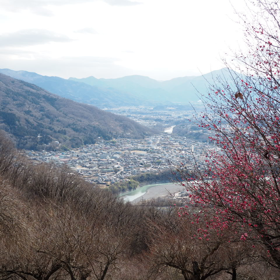 蝋梅の山へ_b0206421_17300664.jpg