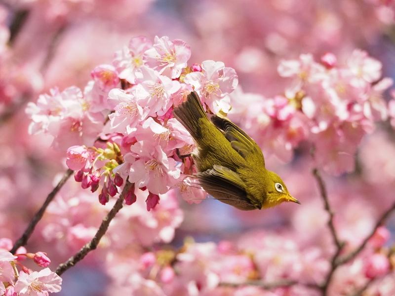 メジロで2020年春を先取り_d0052327_8434829.jpg