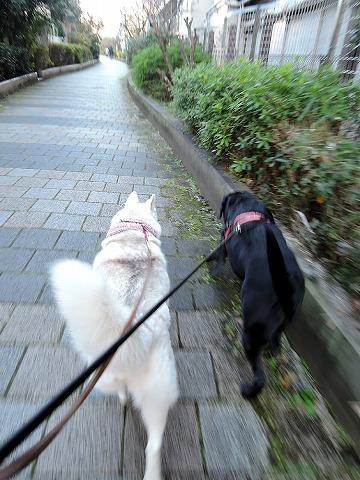 散歩屋日誌【33】_c0062832_15100084.jpg
