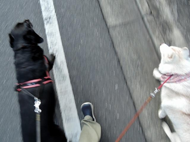 散歩屋日誌【33】_c0062832_15100180.jpg