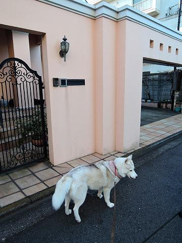 散歩屋日誌【33】_c0062832_15100183.jpg
