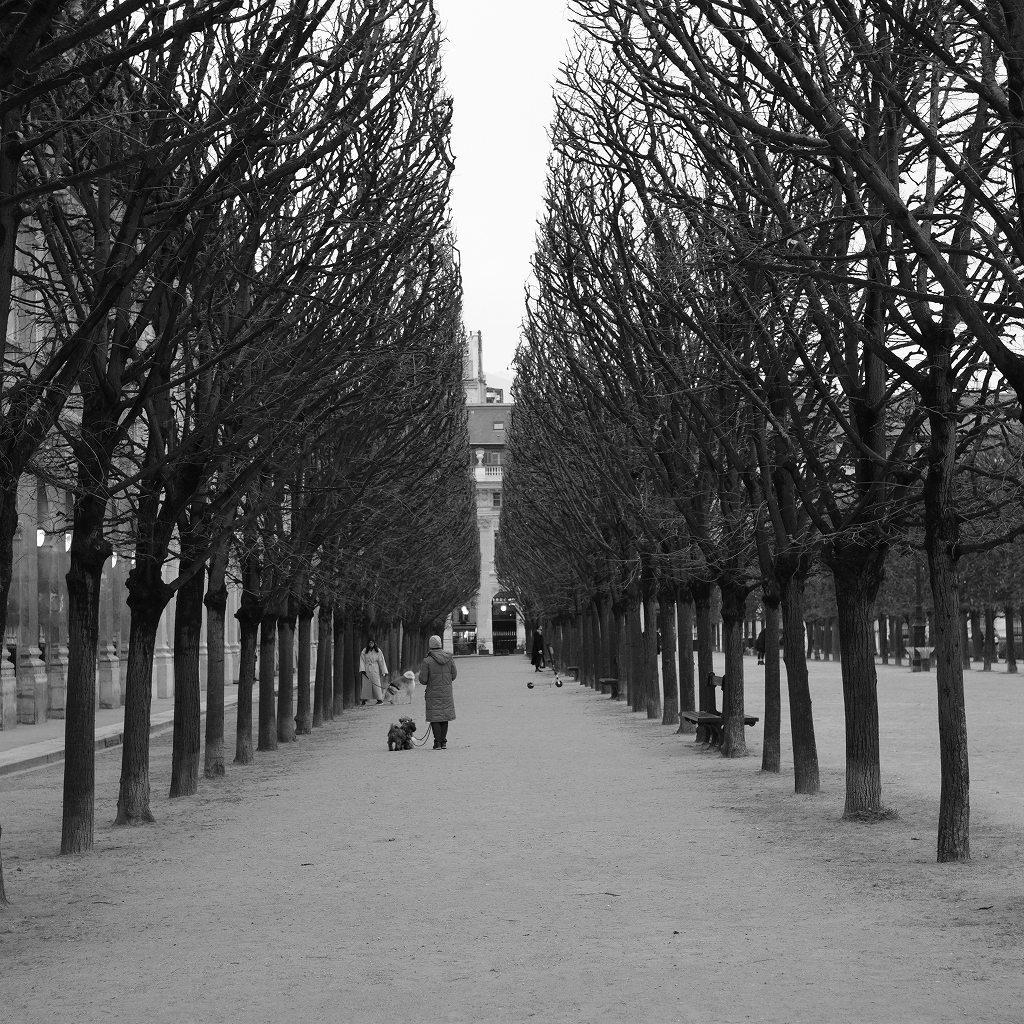 2020/01/23 パリ コンコルド広場から_f0050534_07343669.jpg
