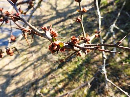 春を続々と発見!_a0123836_14173920.jpg