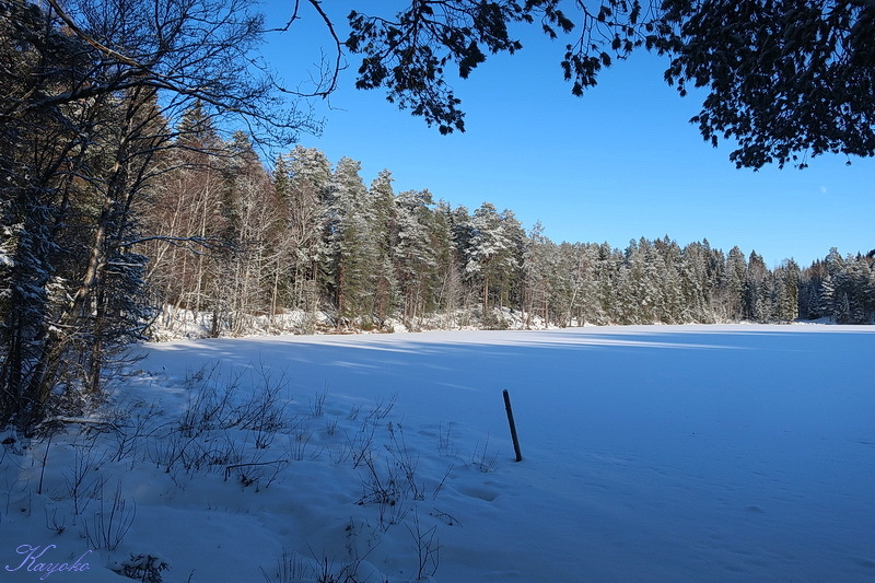 雪_a0353839_04501424.jpg