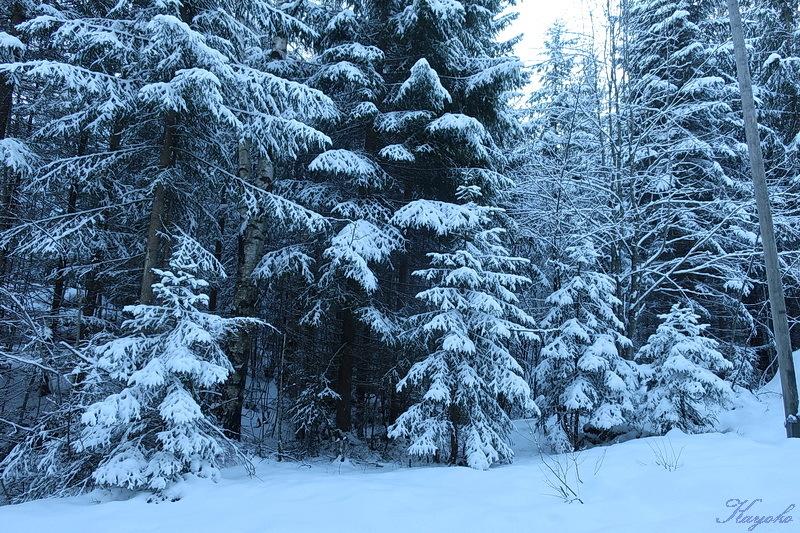 雪_a0353839_04515502.jpg
