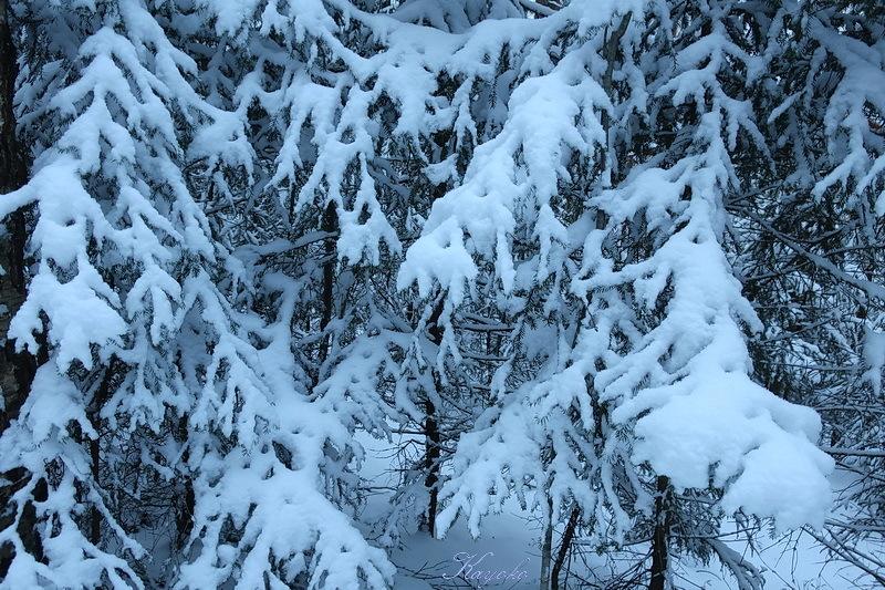 雪_a0353839_04521312.jpg